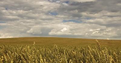 74 ezer hektár termőföldet fiatal gazdák vásároltak meg