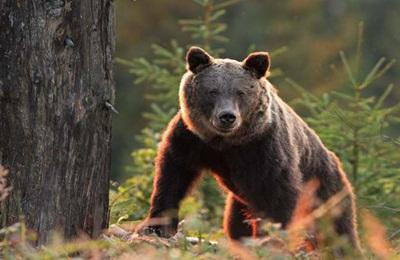 Nyakunkon a medve? Mire számíthatunk a tőzsdéken?