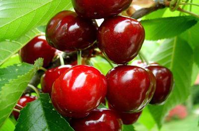 Idén jó lehet a gyümölcstermés a kemény tél ellenére
