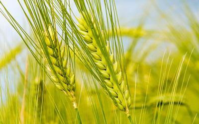 Az OTP nagy fantáziát lát az agrárfinanszírozásban