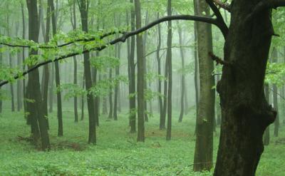 Felhőalapú erdészeti alkalmazást fejleszt a Pannónia Kft.
