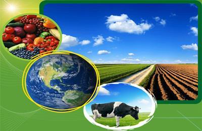 Szorosabbra fűzte kapcsolatait a FAO és az Agrárgazdasági Kutató Intézet