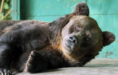 Az orosz medve megdögleni látszik