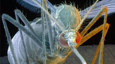 Zikaláz - A FAO készen áll a nemzetközi beavatkozásra a Zika-vírus ellen