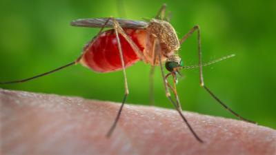 Zikavírus - Szakértő: az oltóanyag csak évek múlva kerülhet forgalomba