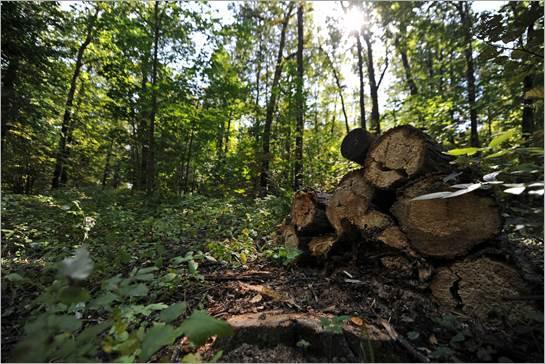 Új törvénymódosítás erdőterületek növeléséért