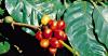 kávé arabica